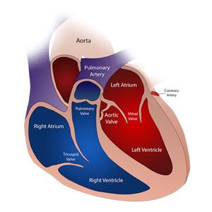 分类图片 心血管护理